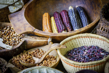 Varieties of Native American Corn and Beans. The Native Americans developed a ...