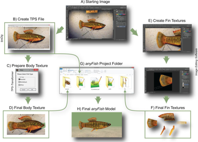 anyFish 2 0: An open-source software platform to generate