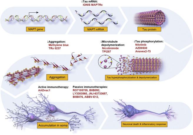 Alzheimer S Disease Drug Development Pipeline 2018 Sciencedirect