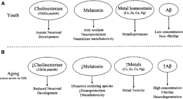The role of acetylcholinesterase inhibitors such as neostigmine and