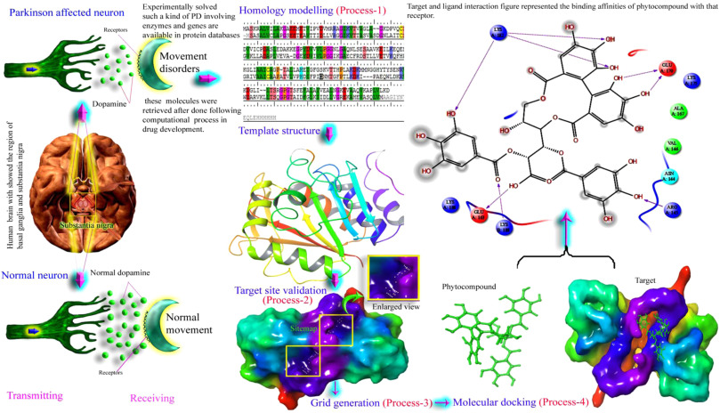 Review on potential phytocompounds in drug development for Parkinson