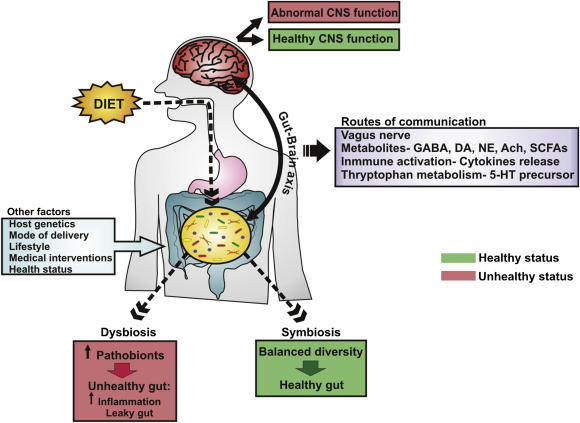 Food For Thought The Role Of Nutrition In The Microbiota Gut Brain