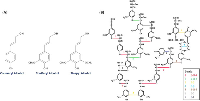 Status and future scope of plant-based green hydrogels in biomedical on