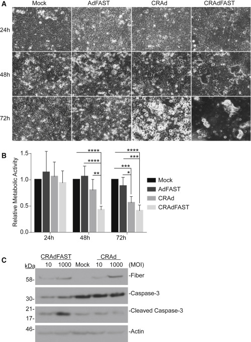 An Oncolytic Adenovirus Vector Expressing p14 FAST Protein