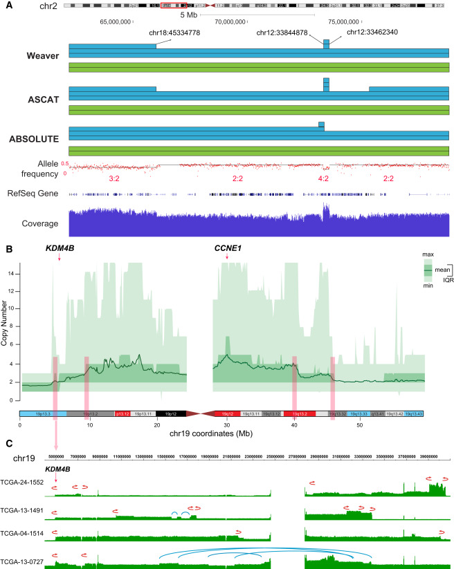 Allele-Specific Quantification of Structural Variations in