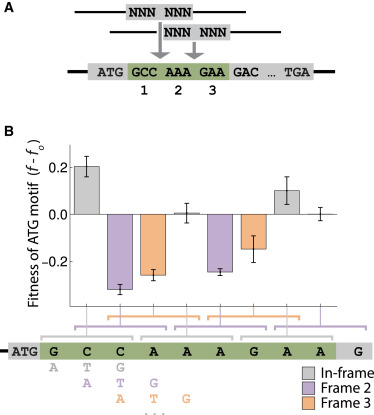 RNA Structural Determinants of Optimal Codons Revealed by