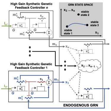 A blueprint for a synthetic genetic feedback controller to reprogram graphical abstract malvernweather Images
