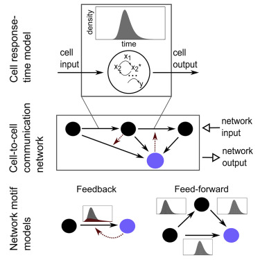 modeling cell to cell communication networks using response time rh sciencedirect com what is an average driver's reaction time