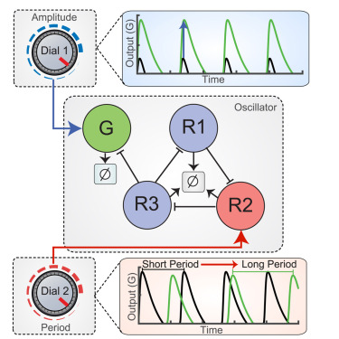 Computational Re-design of Synthetic Genetic Oscillators for