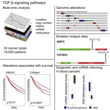 A Pan Cancer Analysis Reveals High Frequency Genetic Alterations In