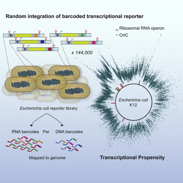 High-Resolution Mapping of the Escherichia coli Chromosome