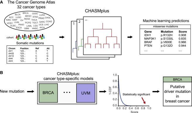 CHASMplus Reveals the Scope of Somatic Missense Mutations