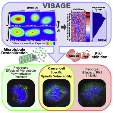 VISAGE Reveals a Targetable Mitotic Spindle Vulnerability in