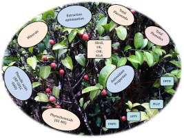 Extraction Efficiency Phytochemical Profiles And Antioxidative