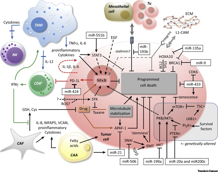 Tumor Host Cell Interactions In Ovarian Cancer Pathways To Therapy Failure Sciencedirect