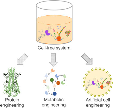 Reprogramming cellular behavior and engineering cell fate