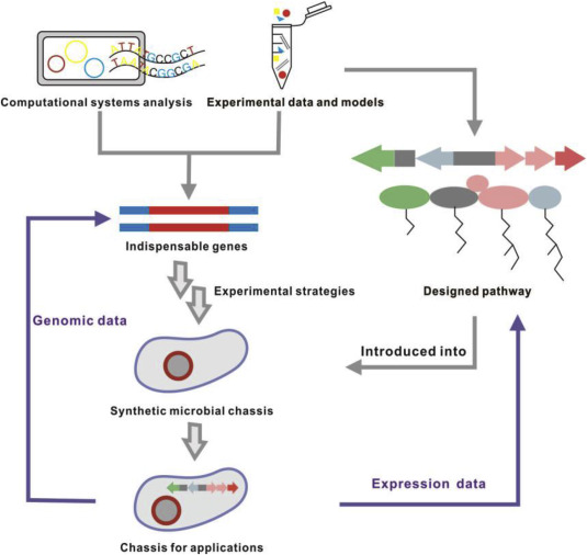Engineering And Modification Of Microbial Chassis For Systems And Synthetic Biology Sciencedirect