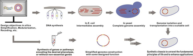 Engineering and modification of microbial chassis for