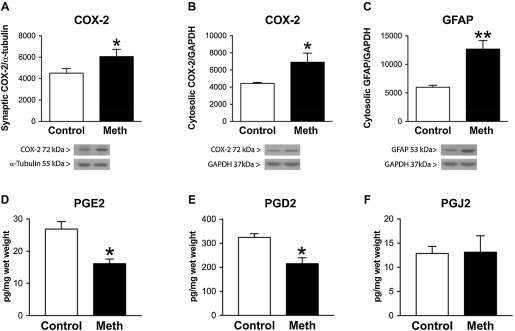 Chronic voluntary oral methamphetamine induces deficits in spatial