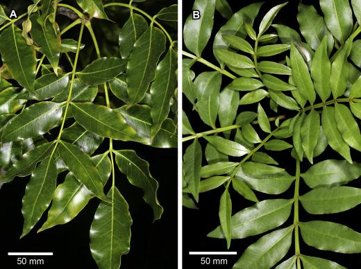 fahn plant anatomy pdf free 18