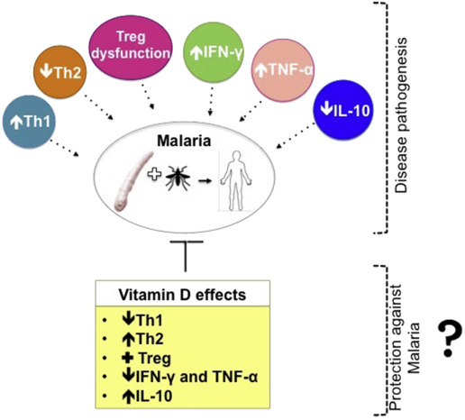Vitamin D in malaria: more hypotheses than clues - ScienceDirect