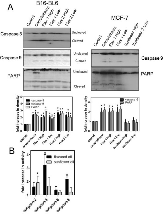 Treatment With Flaxseed Oil Induces Apoptosis In Cultured Malignant Cells Sciencedirect
