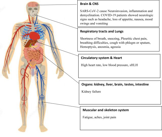 A Systematic Review On Covid 19 Pandemic With Special Emphasis On Curative Potentials Of Nigeria Based Medicinal Plants Sciencedirect