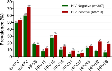 papillomavirus gay