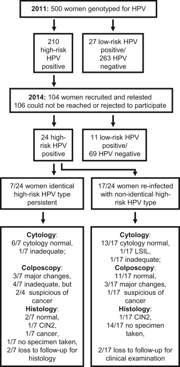Low risk hpv cause cancer. Hpv causes what types of cancer.