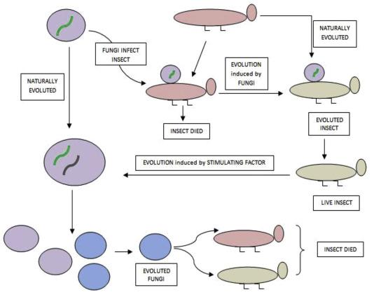 Journey Of Enzymes In Entomopathogenic Fungi Sciencedirect