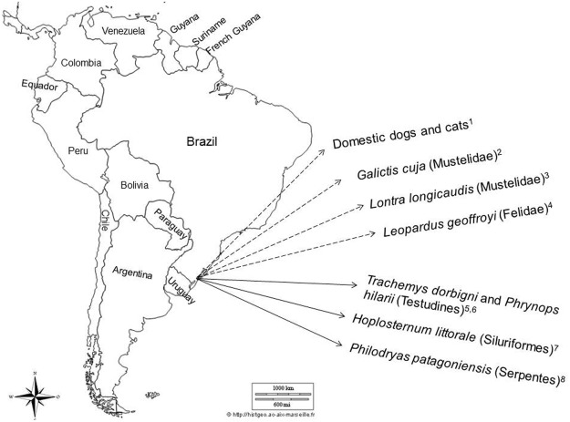 The role of freshwater fish in the life cycle of Dioctophyme renale