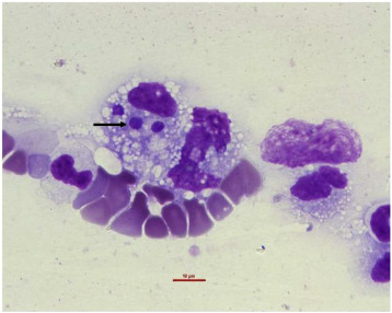 An annotated checklist of tick-borne pathogens of dogs in Nigeria ...