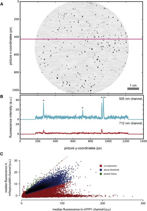 Imaging-Based Screening Platform Assists Protein Engineering