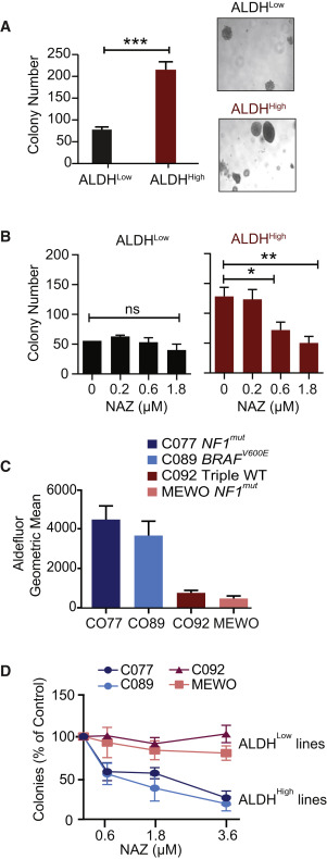 ALDH1 Bio-activates Nifuroxazide to Eradicate ALDHHigh