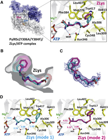Structural Basis for Genetic-Code Expansion with Bulky