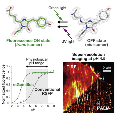 Acid-Tolerant Reversibly Switchable Green Fluorescent