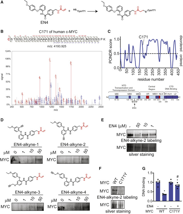Discovery of a Functional Covalent Ligand Targeting an Intrinsically  Disordered Cysteine within MYC - ScienceDirect