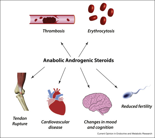 effects of anabolic steroids on athletes