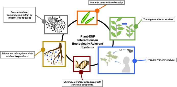 Nanotechnology in agriculture: Next steps for understanding