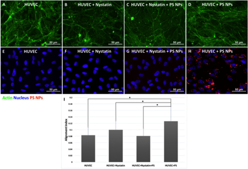 Endothelial barrier dysfunction induced by nanoparticle