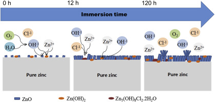 Initial formation of corrosion products on pure zinc in