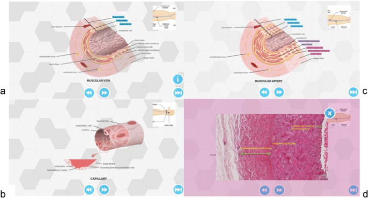Blended Learning in Anatomy Teaching for Non-Medical