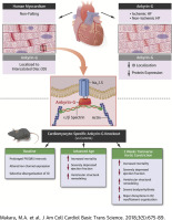 Novel Mechanistic Roles for Ankyrin-G in Cardiac Remodeling