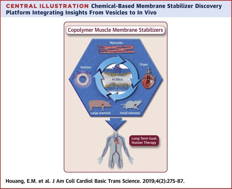 Cardiac Muscle Membrane Stabilization in Myocardial