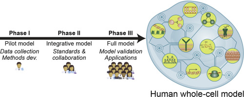 A blueprint for human whole cell modeling sciencedirect graphical abstract malvernweather Choice Image