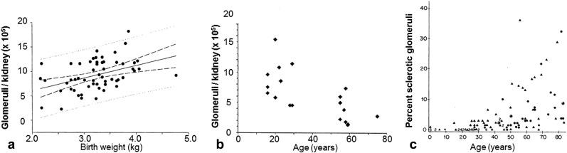 Evolutionary Nephrology - ScienceDirect