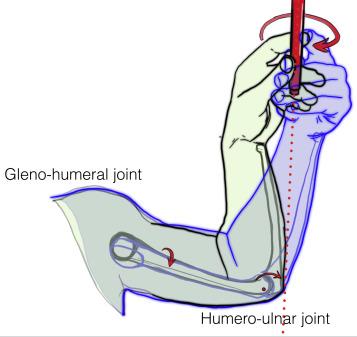 Pronation and supination of the hand: Anatomy and biomechanics ...