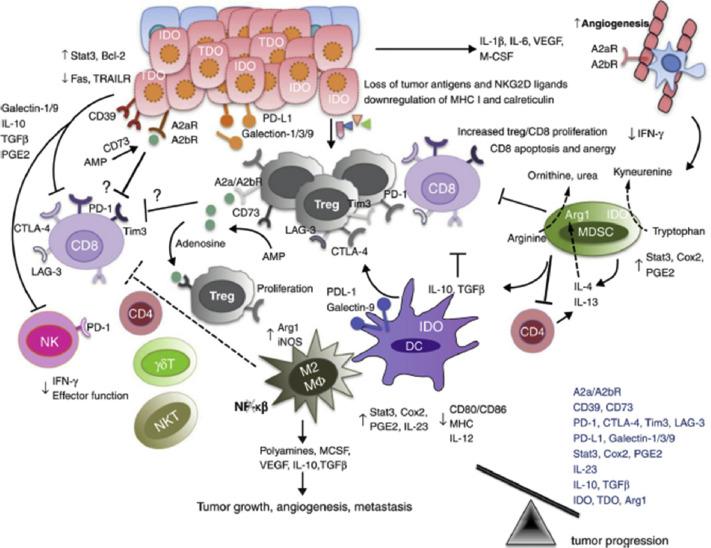 Immunomodulation and cancer: Using mechanistic paradigms to inform