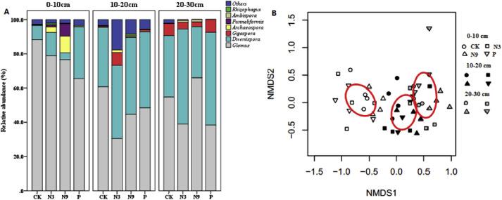 N P Fertilization Did Not Reduce AMF Abundance Or Diversity