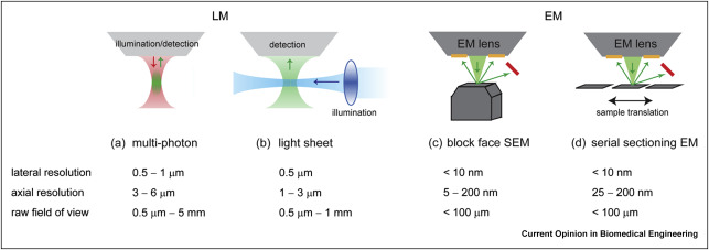 Correlating 3d light to 3d electron microscopy for systems biology figure ccuart Image collections